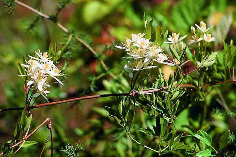 Agriturismo Zennare - Bosco Nordio, la flora