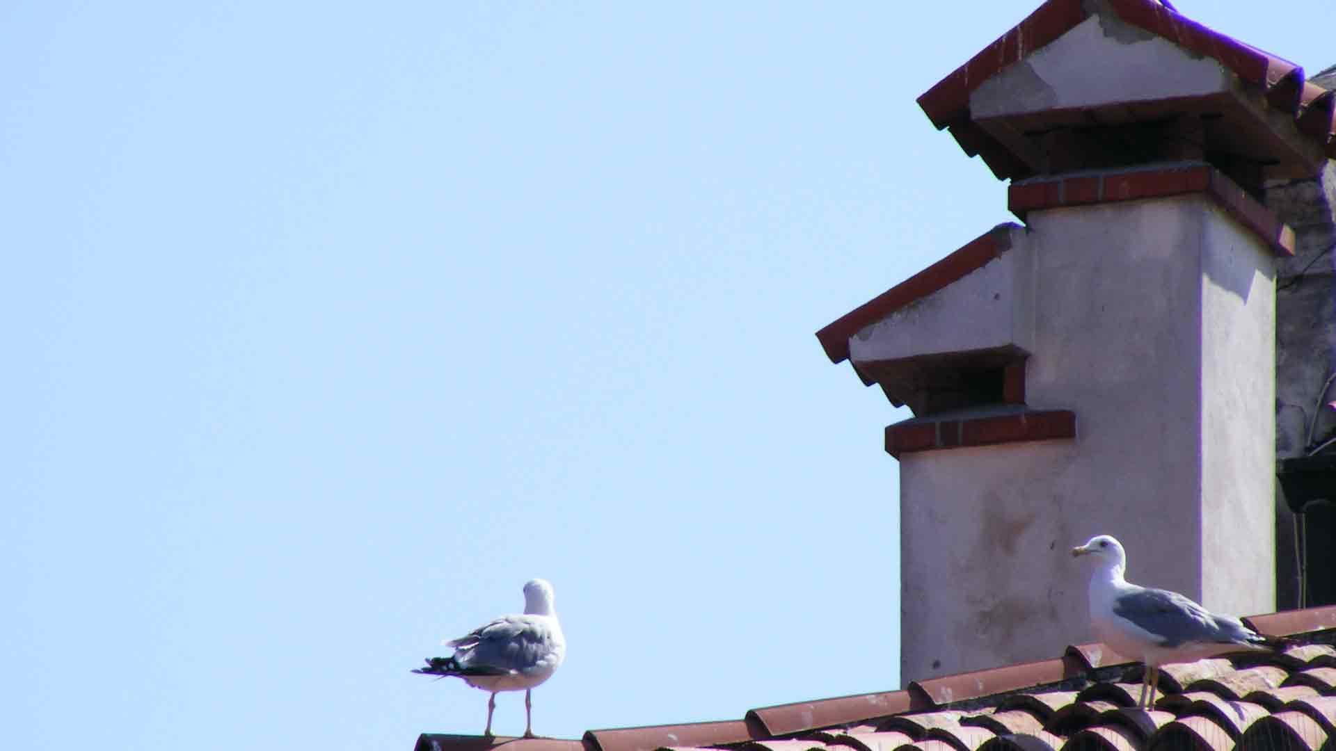 Chioggia - Gabbiani sui tetti