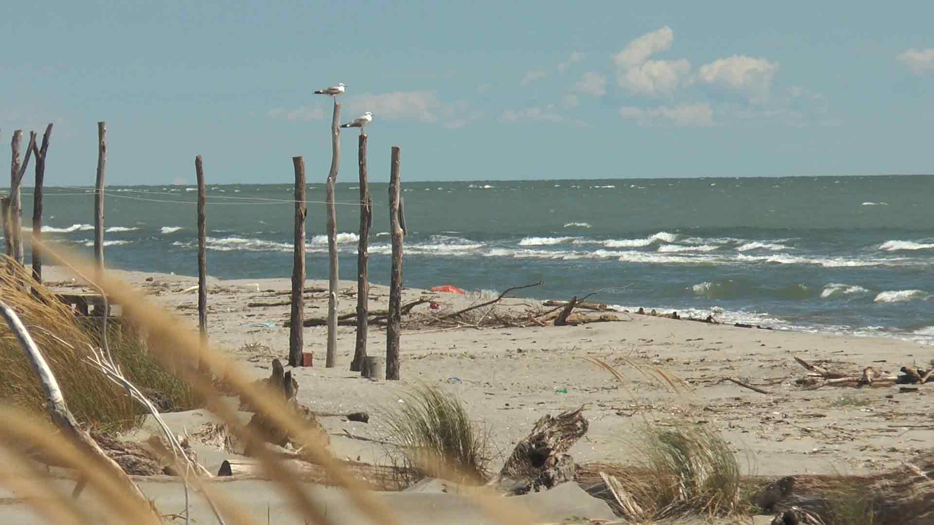 Delta del Po - La spiaggia di Scanno Boa